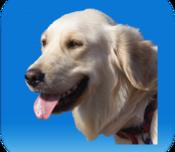 Agenda Medica del Cane: salvare le informazioni riguardanti la salute dei nostri cani